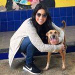 दाना एलेक्सा कुत्ता प्रेमी